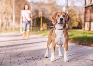 4 Benefits of Walking Your Dog